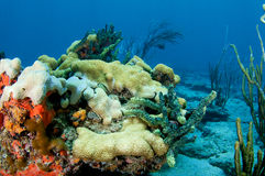 Coral Reef Composition. Stock Photography