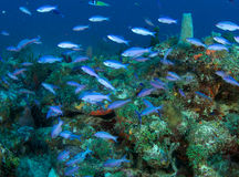 Coral Reef Composition. Stock Photo