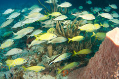 Coral Reef Composition with fish aggregation Stock Photo