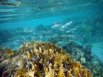 Coral Reef con los pescados de las multitudes Imagenes de archivo