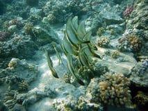 Coral Reef con multitudes coloridas de los pescados Foto de archivo libre de regalías