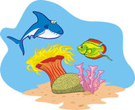 Coral reef - coral fish Stock Photography