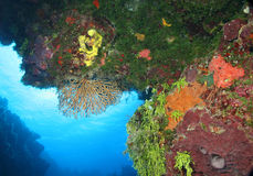 Coral Reef - Cozumel, Mexic Royalty Free Stock Photo