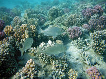 Coral Reef with creatures Royalty Free Stock Photo