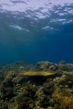 Coral reef crest under the surface Royalty Free Stock Photos