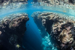 Coral Reef Crevice. A narrow crevice has eroded in a shallow coral reef in Indonesia. Cracks, crevices, and caverns provide shadowed habitat for many marine Stock Photography