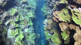 Coral Reef Crevice stock video