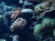 Coral Reef cyan Image libre de droits