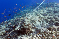 Coral reef destroyed by the mooring line Royalty Free Stock Photo