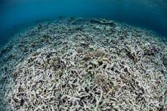 Coral Reef Destruction Stock Images