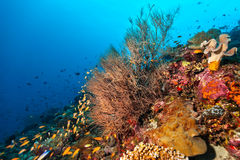 Coral reef with detail of soft corals Stock Photos