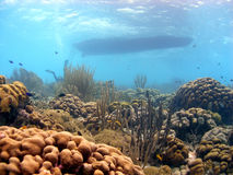 Coral reef and dive boat. A coral reef scene showing the abundance of both hard and soft corals and aquatic plants in shallow waters, with the dive boat above royalty free stock photography