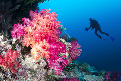 Coral reef and diver Royalty Free Stock Photography