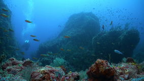 Coral reef with diver stock footage