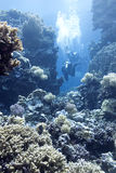 Coral reef with divers in tropical sea, underwater Royalty Free Stock Images