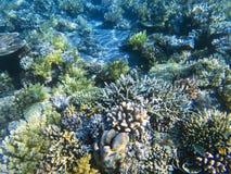 Coral Reef Diversity Água pouco profunda exótica da costa da ilha Foto subaquática da paisagem tropical do litoral Imagens de Stock Royalty Free