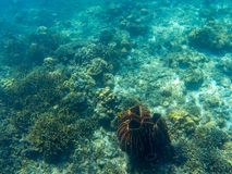 Coral reef diversity top view. Tropical seashore underwater photo. Extinct coral reef. Sea bottom perspective landscape