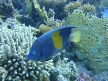 Colorful underwater world of the Red sea stock images