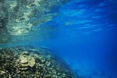 Coral reef drop off Royalty Free Stock Photo