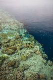Coral Reef Drop Off. A beautiful coral reef grows in shallow, clear water in Wakatobi National Park, Indonesia. This tropical region is known for its incredible Royalty Free Stock Photos