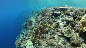 Coral Reef Drop Off stock footage