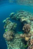 Coral Reef Drop Off en Raja Ampat image stock