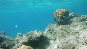 Coral reef dwellers in Red Sea stock video
