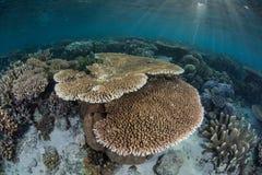 Coral Reef e luz solar Imagem de Stock Royalty Free