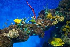 Coral Reef e peixes tropicais na luz solar fotografia de stock