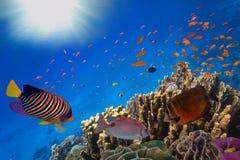 Coral Reef e peixes tropicais na luz solar Imagem de Stock