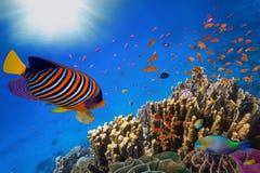 Coral Reef e peixes tropicais na luz solar Fotos de Stock Royalty Free