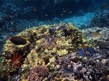 Coral Reef e peixes tropicais no Mar Vermelho Foto de Stock