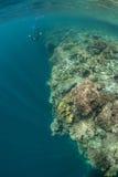 Coral Reef e Snorkeler foto de stock