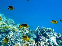 Coral Reef, Ecosystem, Coral Reef Fish, Underwater stock photos