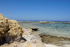 Coral reef. On egypt coast near el quesir Stock Images