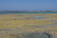 Coral reef. On egypt coast near el quesir Stock Photography