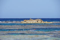 Coral reef. On egypt coast near el quesir Royalty Free Stock Photos