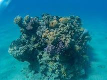 Coral Reef in Eilat royalty-vrije stock fotografie