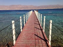 Coral Reef Eilat Israel fotografie stock libere da diritti