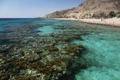 Coral Reef in Elat lizenzfreie stockfotografie