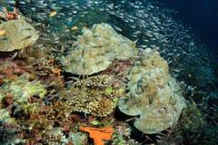 Coral Reef en het Scholen Vissen Stock Afbeelding