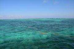 Coral Reef en la isla Belice del calafate de Caye fotografía de archivo libre de regalías