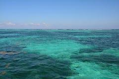 Coral Reef en la isla Belice del calafate de Caye imágenes de archivo libres de regalías