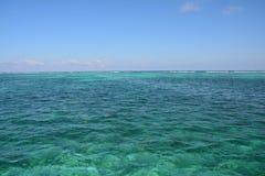 Coral Reef en la isla Belice del calafate de Caye fotos de archivo