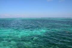 Coral Reef en la isla Belice del calafate de Caye foto de archivo libre de regalías
