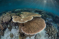 Coral Reef en Zonlicht Royalty-vrije Stock Afbeelding