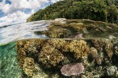 Coral Reef et île Image libre de droits