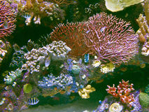 Coral reef with exotic fishes at colorful tropical sea Royalty Free Stock Photo