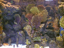 Coral reef with exotic fishes at colorful tropical sea Stock Photography