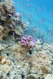 Coral reef with exotic fishes in tropical sea, underwater Stock Photography